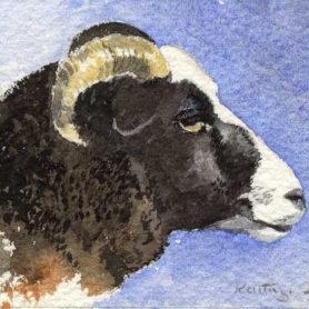 Jacob Sheep -Watercolour